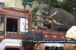 Elephant Meets With Accident When Being Transported On Lorry