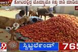 Chitradurga: Tomato Farmers Suffers Loss Due To Lack Of Transportation Amid Lockdown