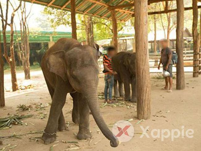 Captive elephants enter State register
