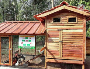 KVK solution to poultry rearing in urban areas