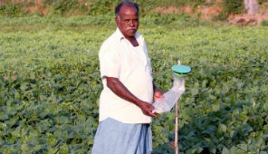 Tamil and Krishna in the field of natural agriculture | Pondicherry